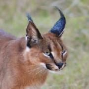 Hamerton Zoo Park - Animal Park Huntingdon, Cambridgeshire